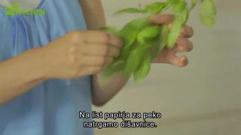 Jolina pica